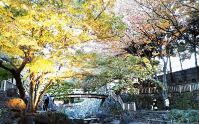音無親水公園・紅葉ライトアップ(11月下旬)