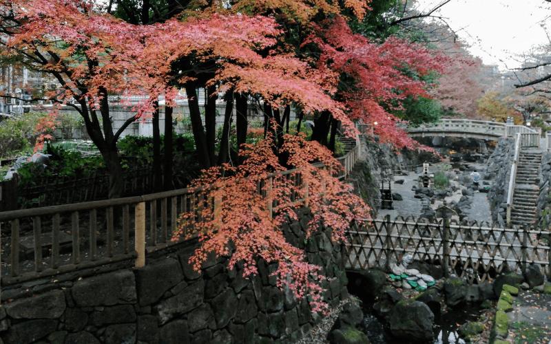 音無親水公園・紅葉(12月上旬)