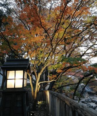 音無親水公園・紅葉ライトアップ(12月上旬)