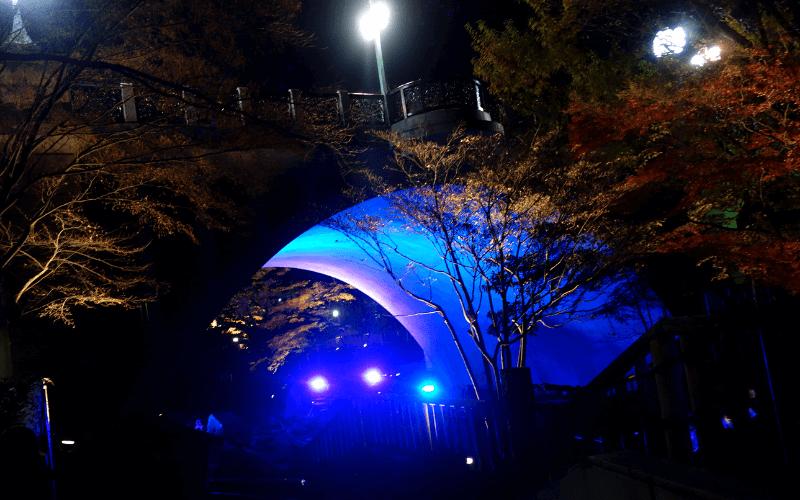 音無親水公園・紅葉ライトアップ(12/15)