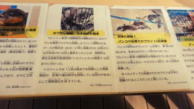 サンシャイン水族館「カワウソWEEK+」