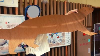 サンシャイン水族館「カワウソWEEK+」オオカワウソの大きさ