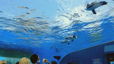 サンシャイン水族館・天空のペンギン