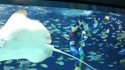 サンシャイン水族館・シャンシャインラグーン・水中パフォーマンス