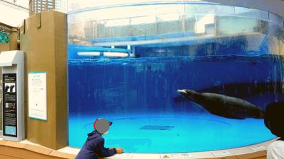 サンシャイン水族館・アシカ