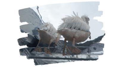サンシャイン水族館・モモイロペリカン