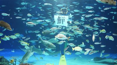 サンシャイン水族館・サンシャインラグーン・水中パフォーマンス