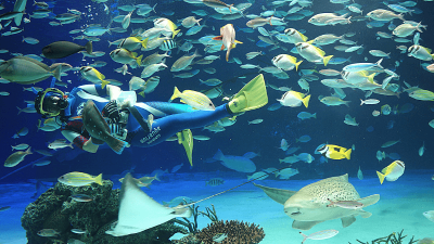 サンシャイン水族館・サンシャイン水族館・水中パフォーマンス