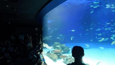 サンシャイン水族館・サンシャインラグーン