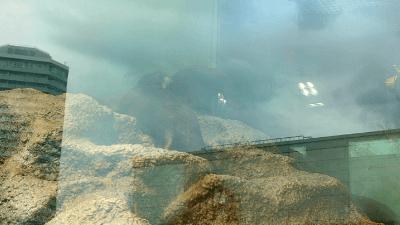 サンシャイン水族館・カワウソ