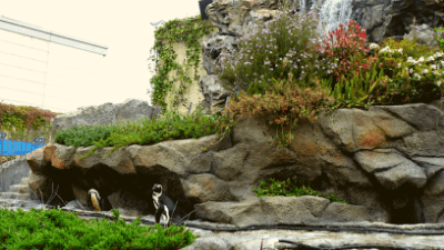 サンシャイン水族館・草原のペンギン