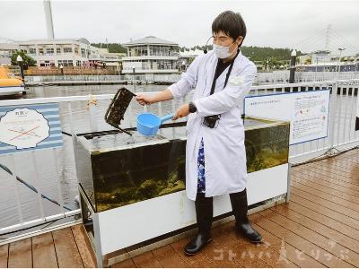 横浜・八景島シーパラダイス「うみファーム」ガイドツアー『東京湾ワンダーウォッチャーズ』