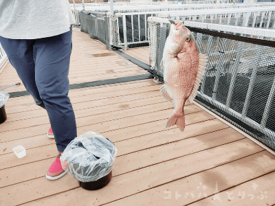 「うみファーム」魚釣り・鯛【横浜・八景島シーパラダイス】